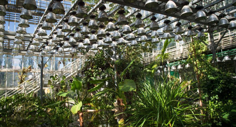 роддом предлагает оранжерея в ботаническом саду в москве молодая сучка